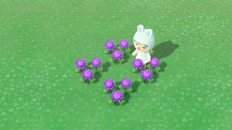 緑 菊 あつ 森